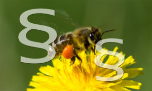 Prozess gegen Bienen