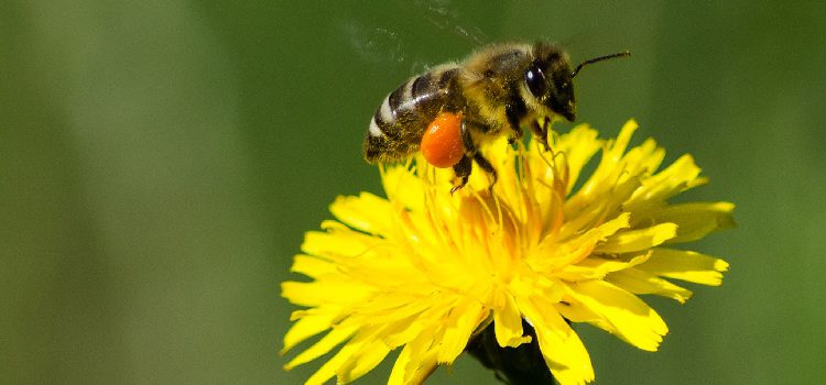 Kaum Bienenflug während Hauptsaison