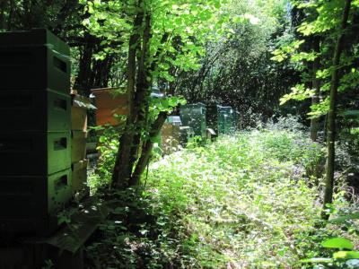 Einer unserer Bienenstände (aufgenommen am 29.05.2009). An diesem Standort stehen ca. 20 Bienenvölker (auf dem Foto nicht alle sichtbar). Wie man erkennen kann, brummt's da schon ordentlich!
