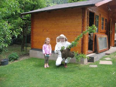 Eine große Traube aus unzähligen Bienen ... wieder eingefangen.