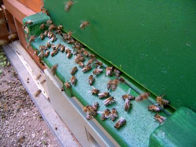 """Bei """"Starts"""" und """"Landungen"""" kann wohl kein Flughafen der Welt mit einem Bienenstand mithalten."""