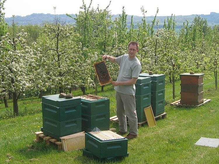 Ein Bienenstand bei Obstbäumen garantiert einen reichen Obstertrag