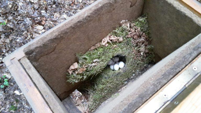 Ein Zaunkönig baut sein Nest in diesen Bienenkasten