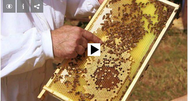 Gefälschtes Bienenwachs im Umlauf